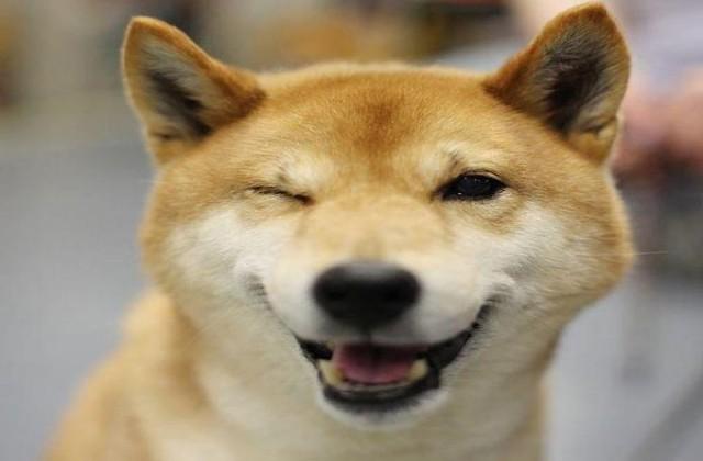 medium_happy-dog-jokeroo