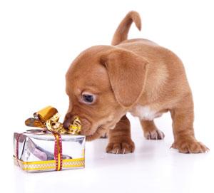 bday dog gift2