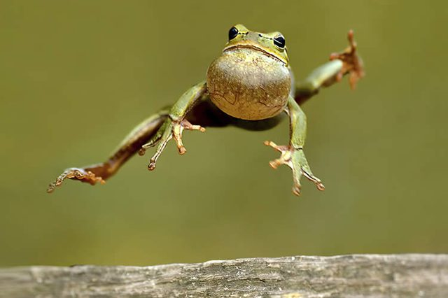 Its-Frog-Jumping-Jubilee-Day